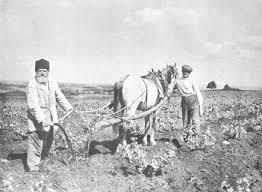 ISRAEL 1913